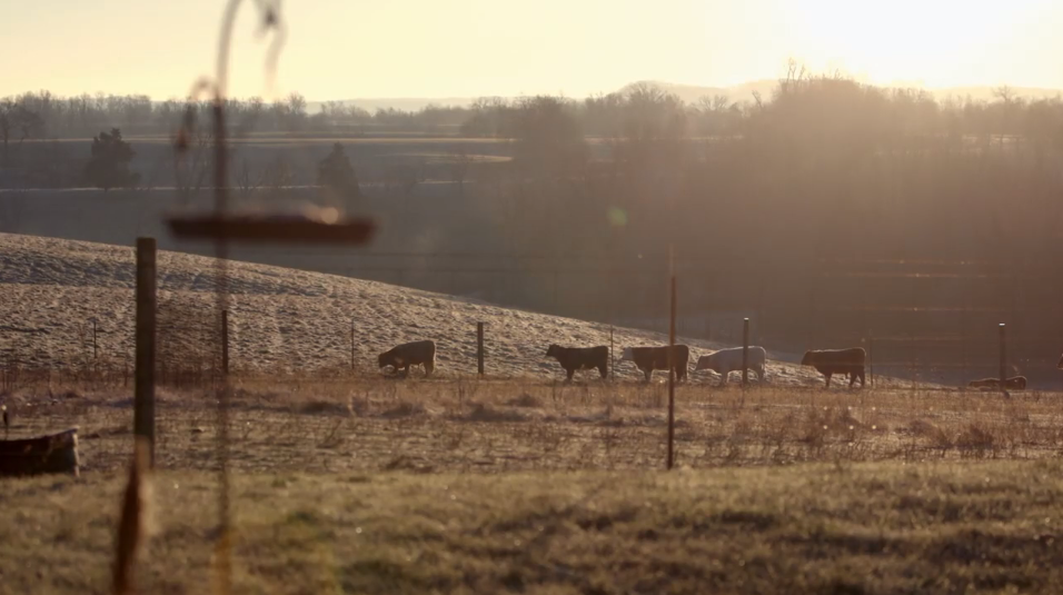 Hillbilly Documentary Still - Animals On Farm